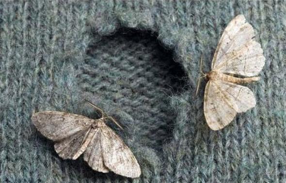 Бабочки моли